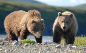 NZDUSD bears
